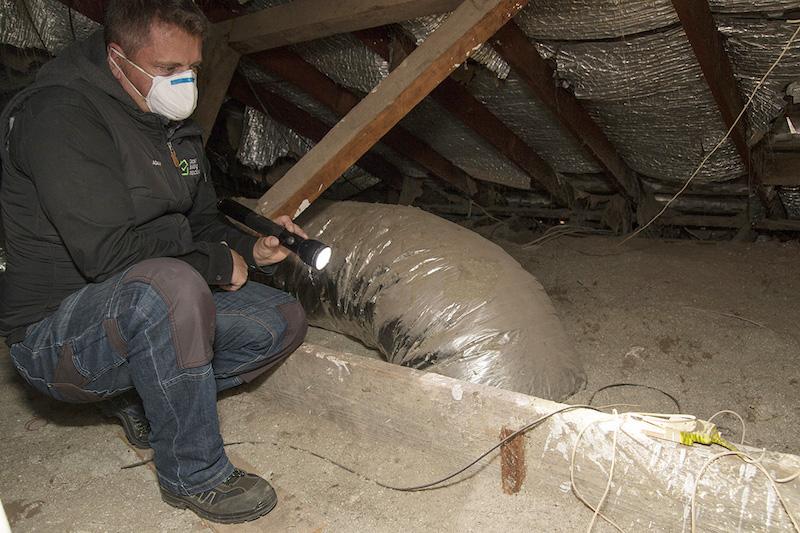 detailbuildinginspections-building-and-pest-inspection-adelaide